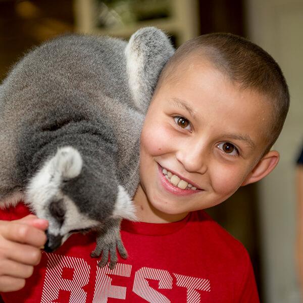 A lemur climbs on Wyatt's shoulder.